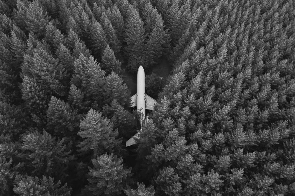 lost plane in pine forest from above